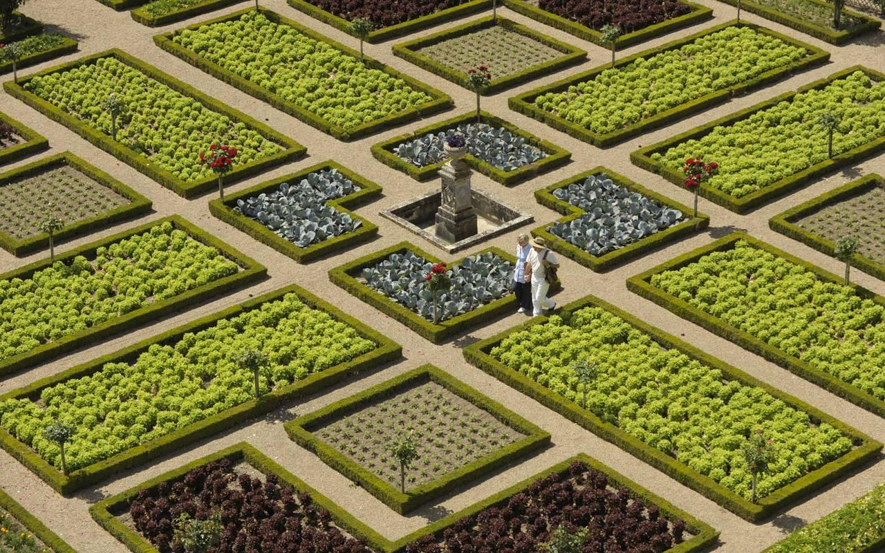 Plantes vertes séjour château de la loire
